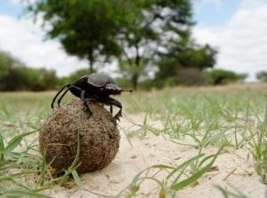 """Sotto la lente di Pelevin: """"La vita degli insetti"""""""